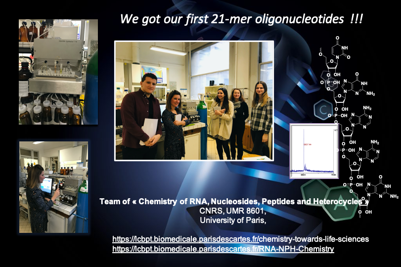 Team Chemistry of RNAs, Nucleosides, Peptides and Heterocycles prepared their first 21-mer oligonucleotides
